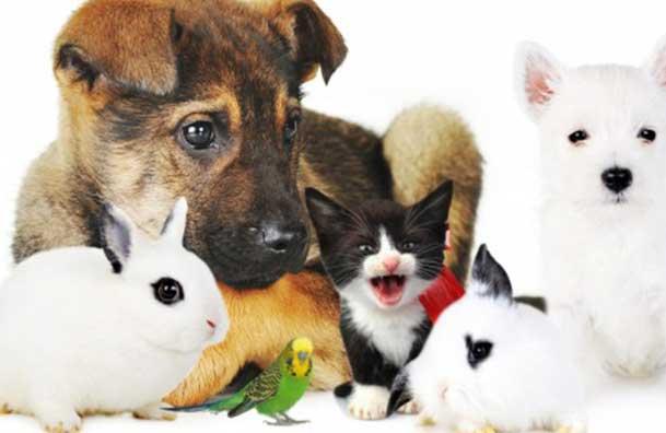Pourquoi vous devriez adopter un animal de compagnie